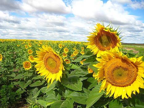 Sunny Days by Matthew Kennedy