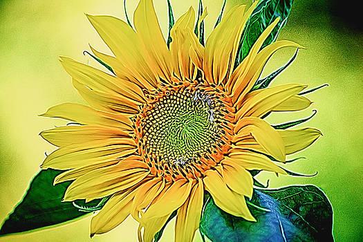 Sunny Daze by Black Brook Photography