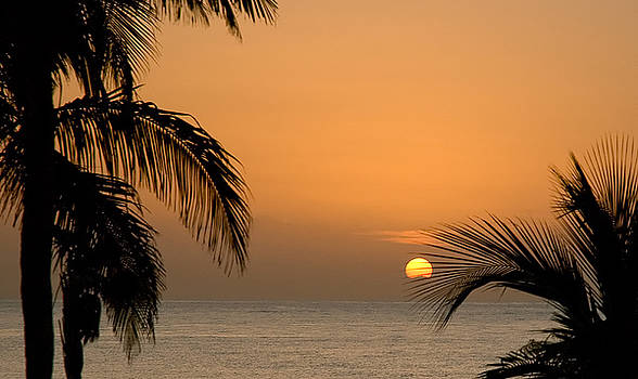 Mick Burkey - Sunrise and Palms