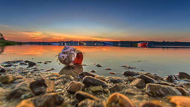 sunrise and Shell On The Beach by Dapixara Art