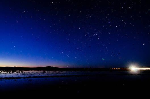 Sunrise and Stars - Bosque del Apache by Preston Broadfoot