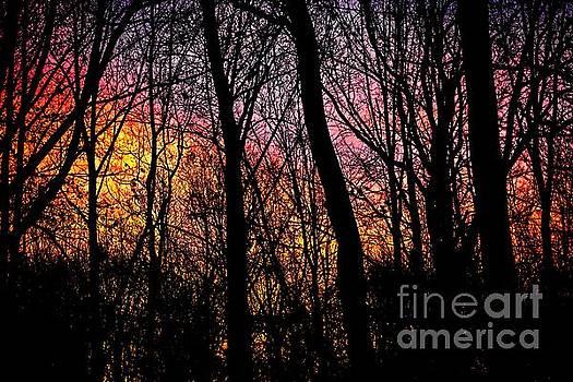 Sunrise in the Woods by JW Hanley