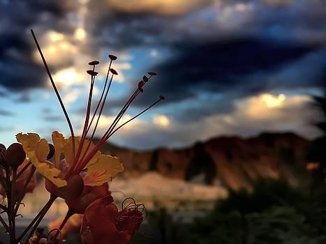 Sunrise La Quinta by Chris Tarpening