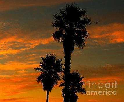 Sunrise Silhouettes by Janice Westerberg