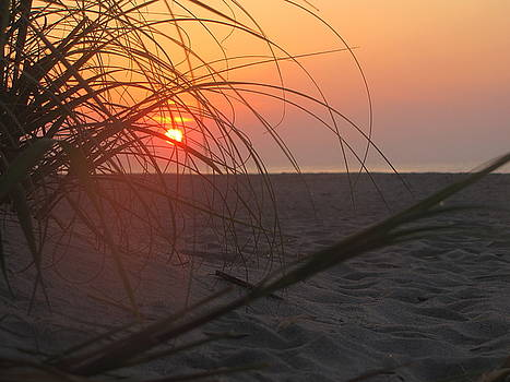 Shane Brumfield - Sunrise through the Grass