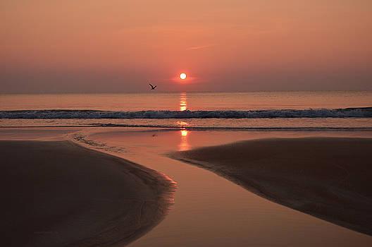 Sunrise with bird 6-14-16 by Julianne Felton