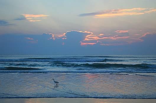 Sunrise with bird by Julianne Felton