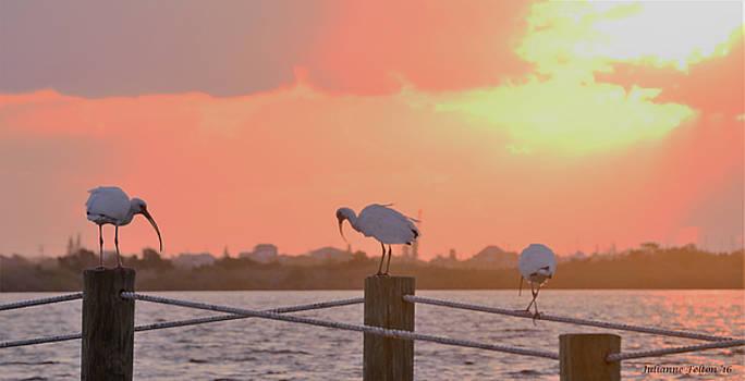 Sunrise with Ibis 10-26-16 by Julianne Felton