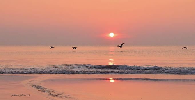 Sunrise with pelicans by Julianne Felton