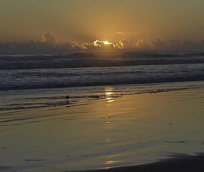 Sunrise with Sandpiper 12-12-15 by Julianne Felton