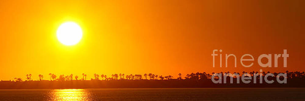 Sunset Along Line Of Palms by Max Allen