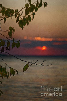 Sunset and Branches by Margie Hurwich