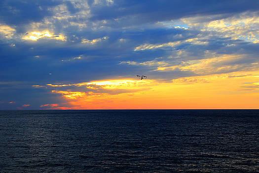 Sunset at Sail Away by Shelley Neff