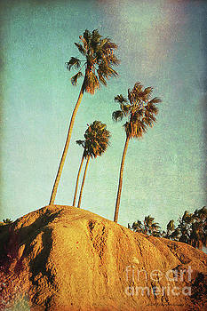Sunset Cliffs Palms by Linda Olsen