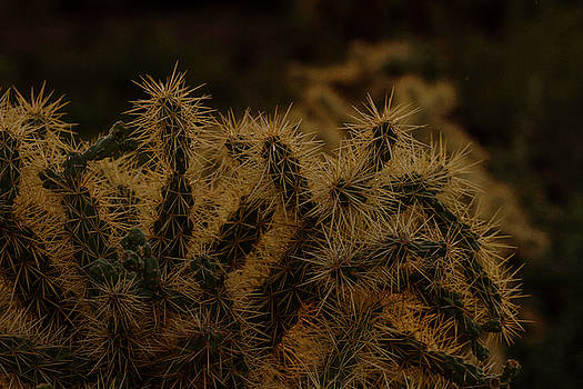 Sunset kissed Cholla by Ruth Jolly