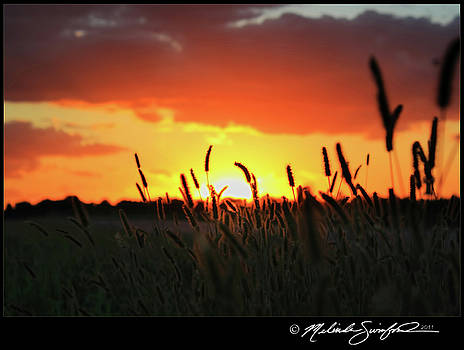 Sunset of Wheat by Melinda Swinford