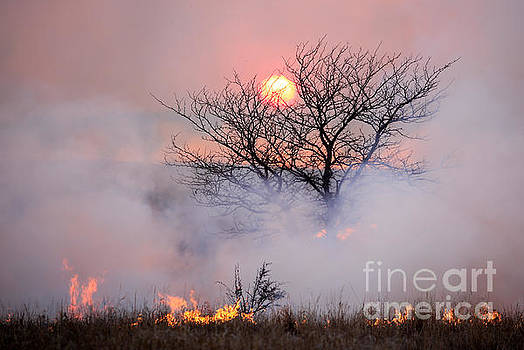 Sunset on a Flint Hills Burn by Lynn Sprowl