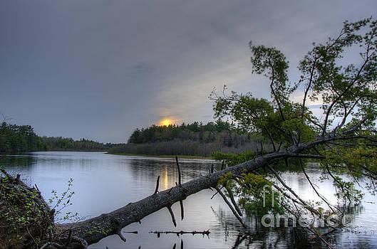Sunset Over Fallen Tree by Marianne Kuzimski