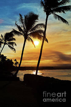 Sunset Palm Trees on Maui Hawaii by ELITE IMAGE photography By Chad McDermott