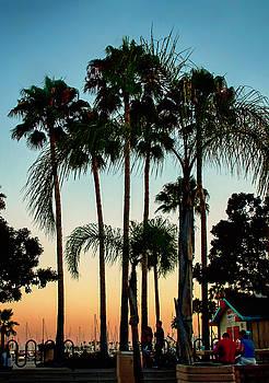 Sunset Palms by Joseph Hollingsworth