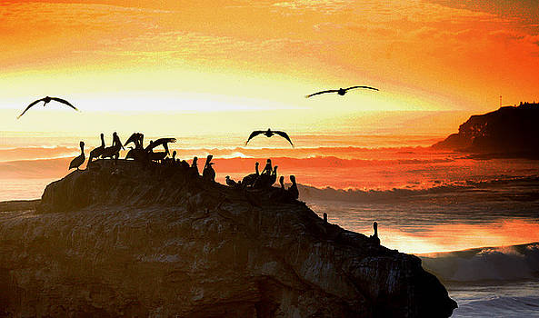 Chuck Kuhn - Sunset Pelicans