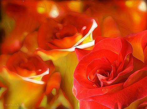 Sunset Rose by Gabriella Weninger - David