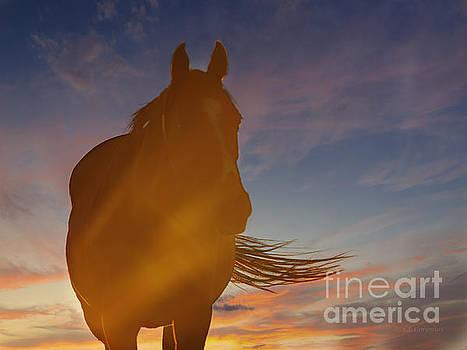 Sunset Silhouette by Carol Lynn Coronios