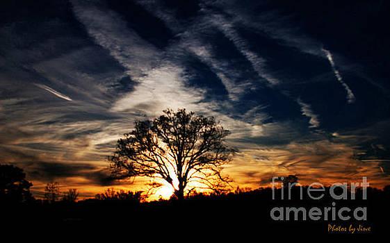 Sunset Skies by Jinx Farmer