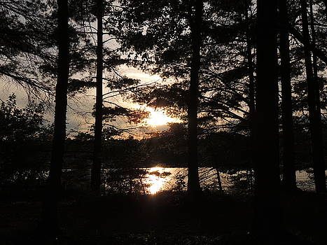 Sunset Through the Pines by Teresa Schomig