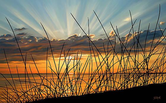Sunset Thru the Grass by Sue  Brehant