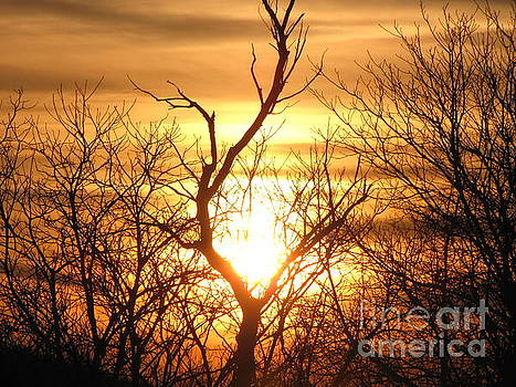 Sunset Tree by Melissa Stoudt