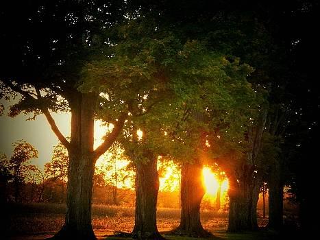 Sunset Trees by Joyce Kimble Smith