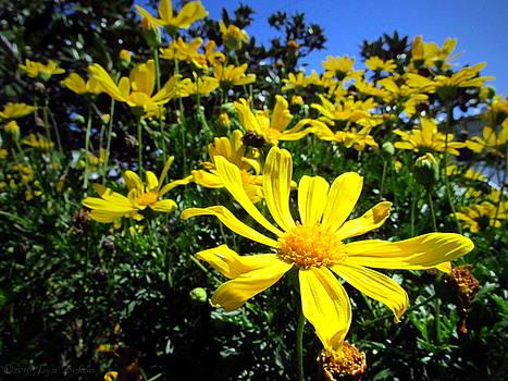 Joyce Dickens - Sunshine And Daisies