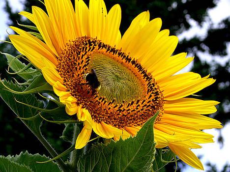 Sunshine and Nectar by David Gardner