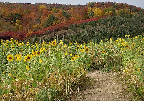 Sunshine Valley by Linda Mishler