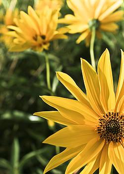 Sunshine Yellow by Nora Blansett