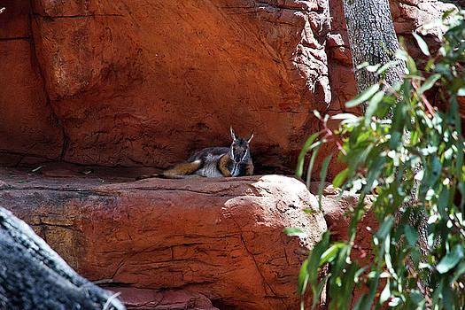 Super Cute Wallaby by Miroslava Jurcik