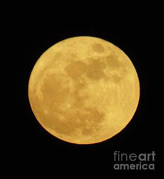 Super Moon December 2016 by D Hackett