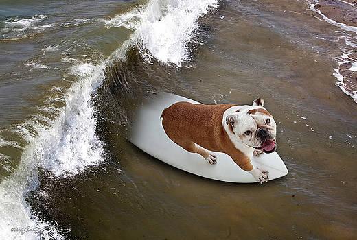 Surfer Dog by John A Rodriguez