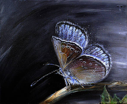 Surreal Common Blue by Tanya Byrd
