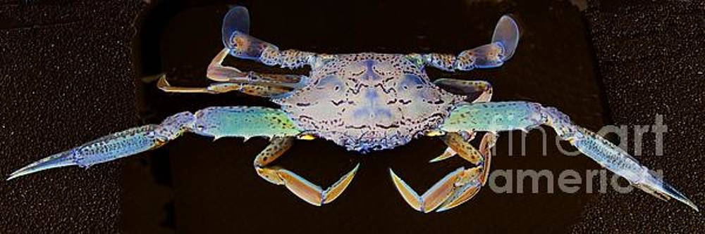 Surreal Crab. Exclusive Original stock Surreal and Abstract  Photo Art digital download. by Geoff Childs
