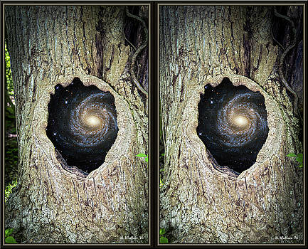 Surreal Tree - X-View Stereo by Brian Wallace