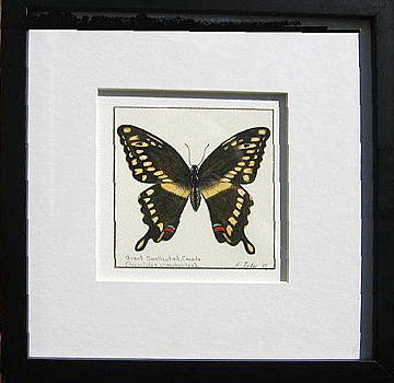 Swallowtail butterfly by Elizabeth H Tudor