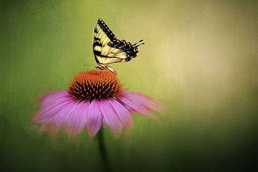 Swallowtail Butterfly on Coneflower by Vicki McLead