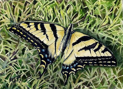 Swallowtail Butterfly by Patricia Pushaw