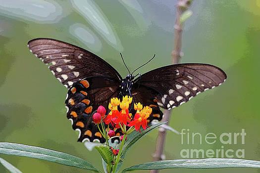 Swallowtail on Flower by Luana K Perez