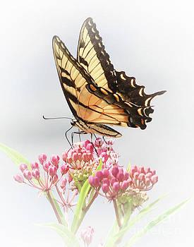 Swallowtail Splendor by Anita Oakley