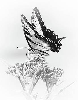 Swallowtail Splendor II by Anita Oakley