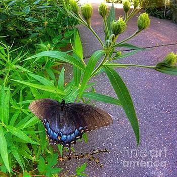 Swallwtail by Rrrose Pix