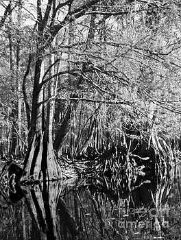 Swamp Reflections by Myrna Bradshaw